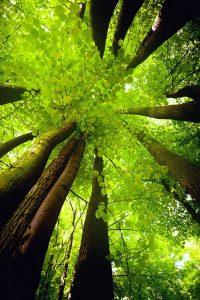 La vie énergie dans la nature